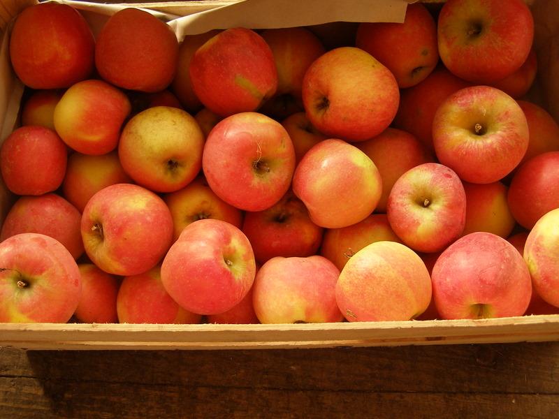 Caisse de pomme variété Jubilé