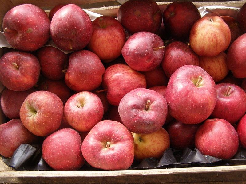 Caisse de pommes Oregon