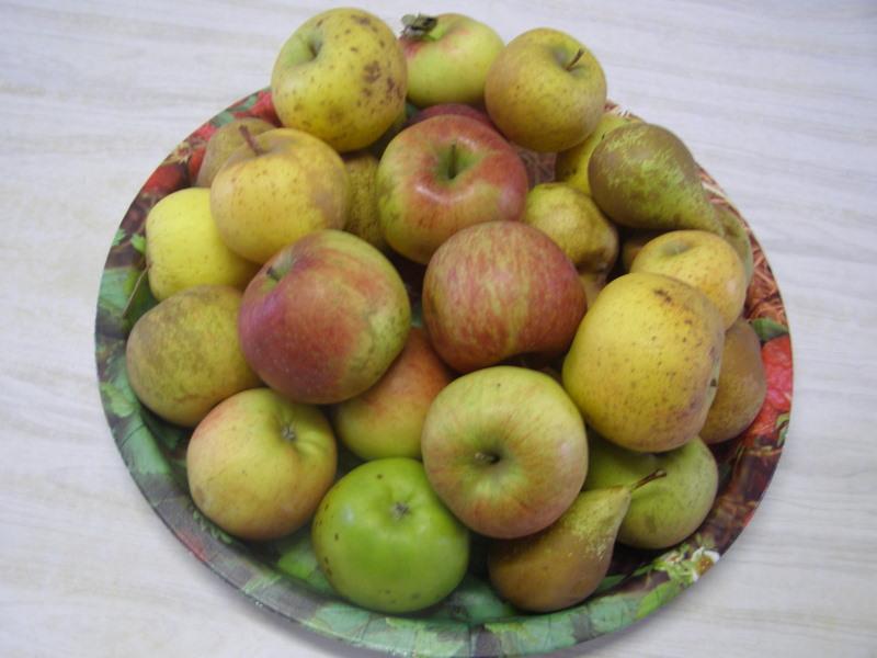 Plateau de fruits pommes / poires